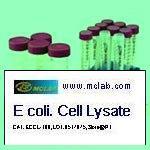 <i>E. coli.</i> (DH5a) Cell Lysate