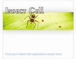 insect cell