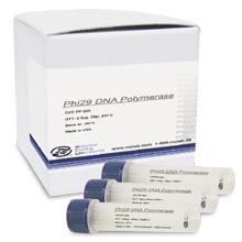 Phi29 DNA Polymerase