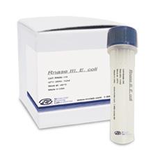 Rnase III, <i>E. coli</i>