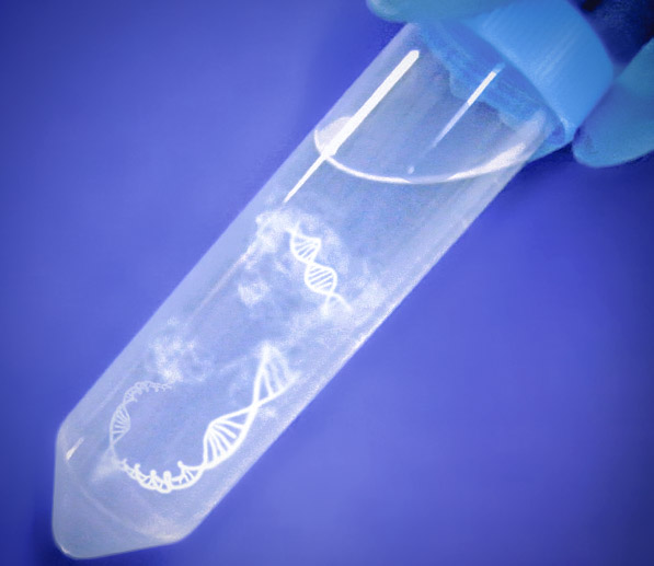 MC Plasmid DNA Purification Service