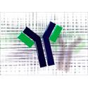 Antibody Sequencing Service